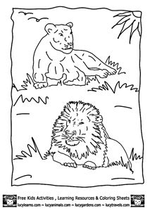 Lion Coloring Pages Printable by Lucy Learns