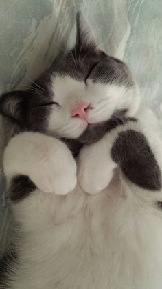 I want to always feel as happy as this cat looks.