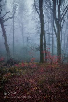 Misty forest by carbrag #nature #mothernature #travel #traveling #vacation #visiting #trip #holiday #tourism #tourist #photooftheday #amazing #picoftheday