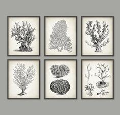 vintage coral wall art set of 6 marine wall art posters nautical print marine biology wall art ab412
