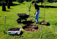 How to plant trees and shrubs.