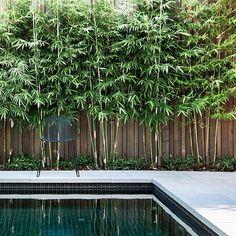 7 Amazing Cool Tips: Cute Backyard Garden Ideas beautiful backyard garden inspiration.Urban Backyard Garden How To Build. Bambu Garden, Garden Pool, Bamboo Garden Ideas, Garden Oasis, Garden Fun, Balcony Garden, Water Garden, Bamboo Landscape, Pool Landscape Design