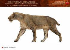 Homotherium nestianus-crenatidens by RomanYevseyev on DeviantArt Prehistoric Wildlife, Prehistoric World, Prehistoric Creatures, Stone Age Animals, Extinct Animals, Cryptozoology, Leopard Cat, Domestic Cat, Fauna