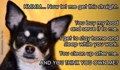 cute chihuahua quotes - Google Search