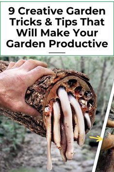 9 AWESOME DIY IDEAS FOR YOUR GARDEN garden ideas, gardening ideas, gardening for beginners, gardening design, gardening tools, gardening hacks, gardening and landscape, gardens and gardening ideas #gardening #gardenhacks #gardeningideas Small Vegetable Gardens, Small Backyard Gardens, Small Gardens, Vegetable Gardening, Gardening Tips, Organic Gardening, Beginners Gardening, Container Gardening, Garden Ideas Large