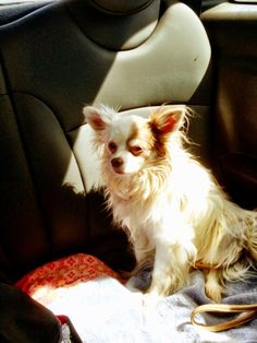 We have Lily in the car with us. Our perfect angel...