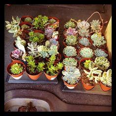 Succulents!!!