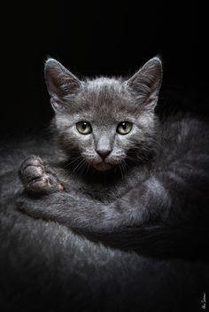 Always gray