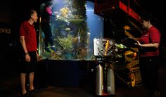 Jeremy Heywood, the Aquarium's diving safety officer, oversees the cleaning of the tropical cylinder exhibit in the Canaccord Financial Exploration Gallery. Vancouver Aquarium, Animal Makeup, Suits You, British Columbia, Exhibit, Diving, Attraction, Safety, Tropical