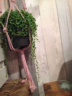 #intratuin geknoopte pothanger roze met een erwtjes plant :)