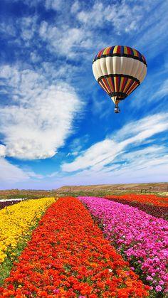 *** un globo estatico sobre los cielos de una hermosa jardinera ***