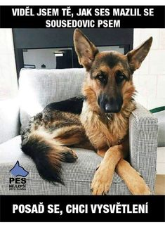 Wicked Training Your German Shepherd Dog Ideas. Mind Blowing Training Your German Shepherd Dog Ideas. Funny Animal Jokes, Funny Dog Memes, Funny Animal Pictures, Animal Memes, Dog Pictures, Funny Dogs, Cute Dogs, Funny Animals, Pet Memes