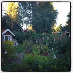 Exploring in these allotments #Sweden