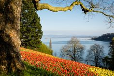 Blick von der Mainau auf den Bodensee in Richtung Konstanz