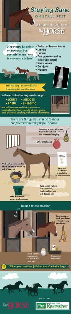 Infographic: Staying Sane on Stall Rest - TheHorse.com | Long-term confinement is difficult for horses but often necessary for healing from certain injuries and illnesses, such as tendon and ligament strains, bone fractures, and laminitis. Learn how to keep horses happy and healthy while on stall rest