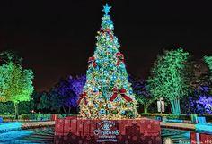 Christmas tree at Sea World