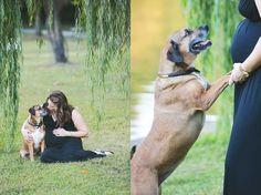 maryland maternity photographer, allen pond park maternity photos, outdoor maternity photos, maternity photos with dog
