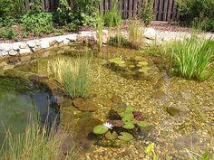 Fancy zahradn jez rko biotop koupac jez rko Zahradn jez rka Kamenosocha stv pl chal