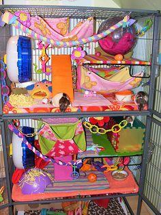 Pet Rat Cages, Pet Rats, Pets, Rat Cage Accessories, Rat House, Dumbo Rat, Fancy Rat, Fur Babies, Sugar Gliders