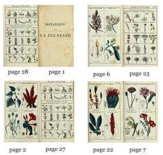"""Printable Book """"Botanique de la Jeunesse 1812""""   true2scale"""
