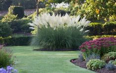 Grass with class: Papas can look superb if placed in the right spot in your garden - Pampasgras & Co. Ornamental Grass Landscape, Ornamental Grasses, Shade Perennials, Shade Plants, Landscaping With Rocks, Backyard Landscaping, Farm Gardens, Native Gardens, Garden Inspiration