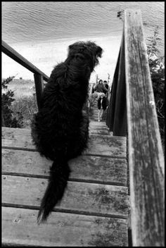 Elliot Erwitt.....I like this photo!