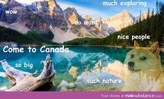 And then doge came along. Best Canadian advert I've ever seen