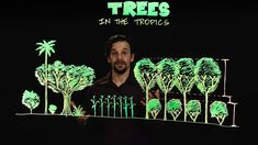 Permaculture Trees in the Tropics
