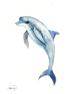 Dolphin, 12 x 9 in, original watercolor painting 12 X 9 in, dolphin art dolphin . Dolphin Drawing, Dolphin Painting, Dolphin Art, Whale Art, Animal Paintings, Animal Drawings, Cute Drawings, Watercolor Animals, Watercolor Paintings
