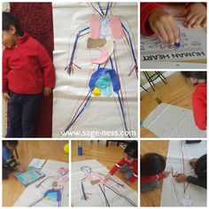 The human heart & organs for pre-school toddlers Heart Organ, Human Heart, Pre School, Preschool Activities, Sage, Toddlers, February, Children, Salvia