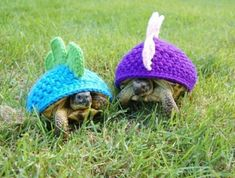 Turtles pretending to be dinosaurs