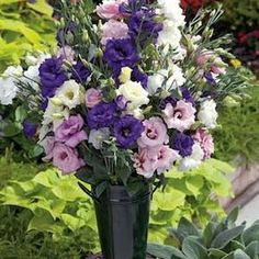 Lisianthus Cinderella Mix   One of my favorite flowers and filler for roses.