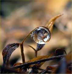 A drop of water that almost looks like a gemstone.