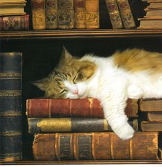 Cat sleeping among books | Flickr - Photo Sharing!