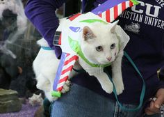 Pin for Later: Your Comprehensive Guide to Dog and Cat Halloween Costumes Buzz Lightyear