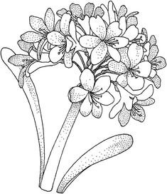 Flower Coloring Pages, Coloring Book Pages, Floral Drawing, Hydrangea Flower, Hydrangeas, Free Printable Coloring Pages, Digi Stamps, Copics, Clipart