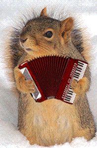 animaux qui jouent de la musique - Recherche Google