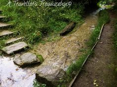 Barton Hills, Bedfordshire. A Traveller's Treasurebox: Localtrotting #hills #england #bedfordshire #forest #stream