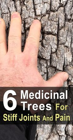 There are several common trees that have bark and leaves with medicinal properties. You can turn them into salves or teas and use them to ease joint pain. #homesteadsurvivalsite #Medicinaltrees #Naturalmedicine
