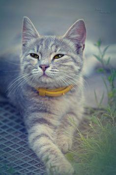 kitten by Julia Gusterina