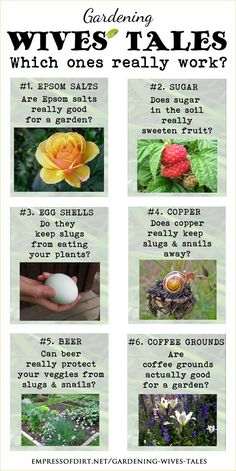 Gardening Wives' Tales - Which ones really work? Sometimes it pays to actually test these things out side by side ... http://empressofdirt.net/gardening-wives-tales/