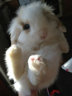 ✿ ~ All Things {WHITE} `✿⊱╮  ***Lovely bunny***