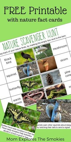 This free printable nature scavenger hunt is a fun and exciting outdoor learning activity for kids. It also comes with free nature fact cards, for more fun!