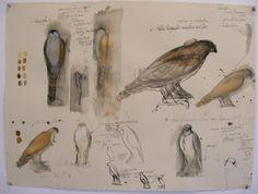Jane Rosen - Sketchbook of this sculptor - from Milliande Artist Sketchbook Spotlights