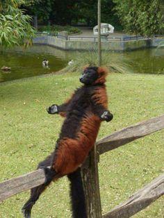 Un peu de Yoga ?! http://www.15heures.com/photos/pA6R #CUTE