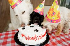 Dog Birthday Cake Recipe With Bacon - Share this image!Save these dog birthday cake recipe with bacon for later by share t Dog Birthday Hat, Birthday Cake For Him, Happy Birthday Dog, Animal Birthday, Funny Birthday, Birthday Funnies, Birthday Images, Birthday Ideas, Party Animals