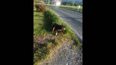 Una perra de caza que o la abandonaron o se perdio.¡es preciosa¡