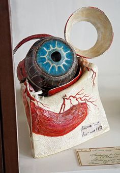 """""""Classic anatomy of the human eye in papier-mâché, prepared by Louis Auzoux's anatomical model‑making company in 1850. The eye is enlarged in order to reveal a complex structure, and each element can be taken apart (Musée Fragonard de l'École Nationale Vétérinaire d'Alfort, Maisons-Alfort)."""" © Christine Fleurent"""