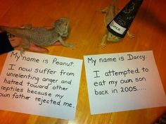 These Cute Reptiles Should Really Be Ashamed Of Themselves - World's largest collection of cat memes and other animals Les Reptiles, Cute Reptiles, Reptiles And Amphibians, Reptiles Preschool, Mammals, Rabbit Cages, Cute Funny Animals, Cute Baby Animals, Pretty Animals