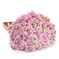 0d171a1ef3482  124 Stock Pink - 100 Stems - Sam s Club Sams Club Flowers